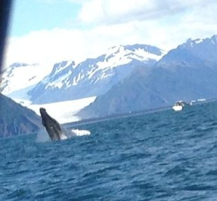 whale breeching water